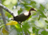 Bird comes back after 136,000 years of Extinction