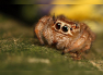 Meet our friendly neighborhood spider