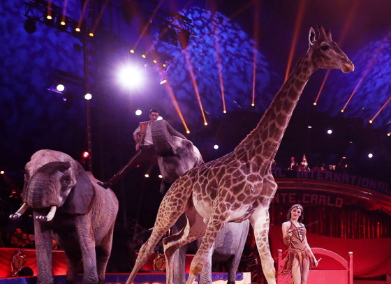Use of wild animals in circuses to be banned in Paris