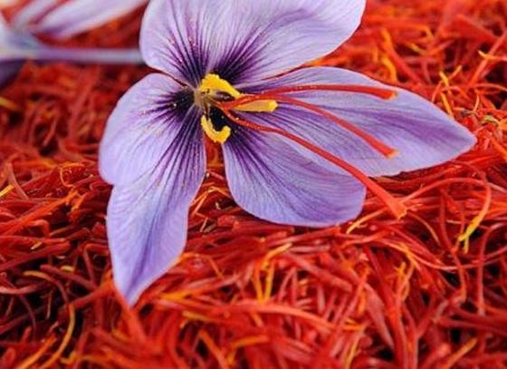 India to produce more saffron!