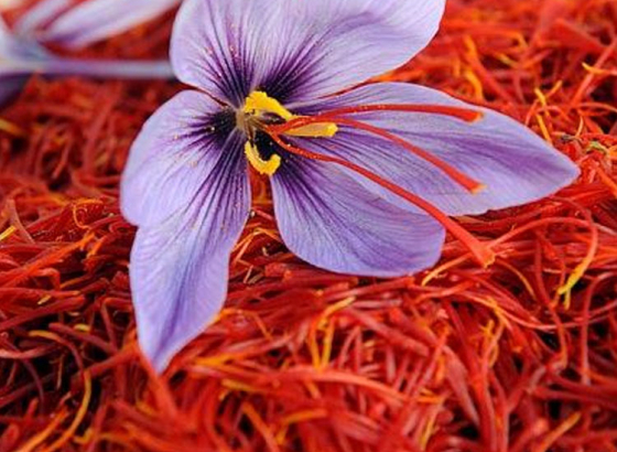 India to produce more saffron!