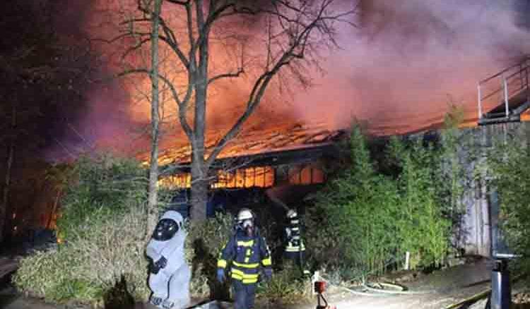 Sky lanterns set zoo on fire