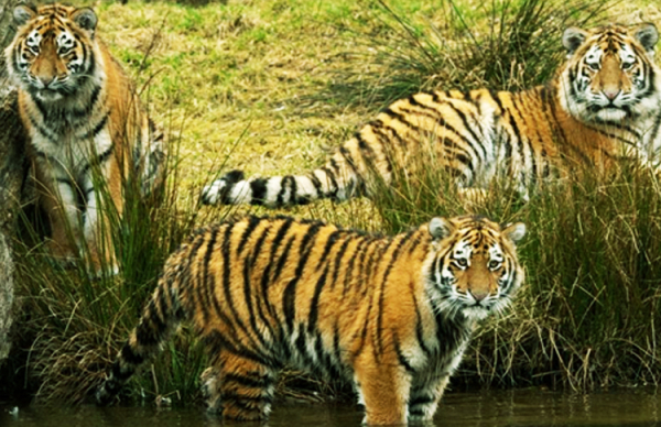 Zoological Survey making a faunal database of the country
